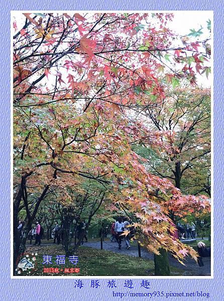 京都。東福寺 (5).jpg