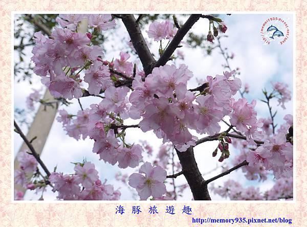 春櫻。台北自來水廠 (1).jpg