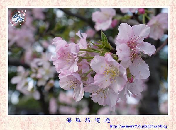 春櫻。台北自來水廠 (8).jpg