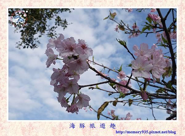 春櫻。台北自來水廠 (9).jpg