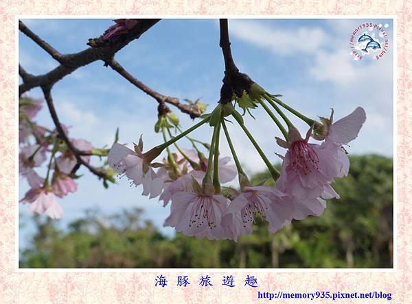 春櫻。台北自來水廠 (10).jpg