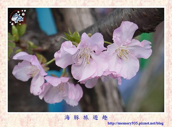 春櫻。台北自來水廠 (12).jpg