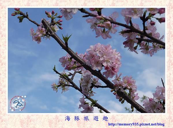 春櫻。台北自來水廠 (22).jpg