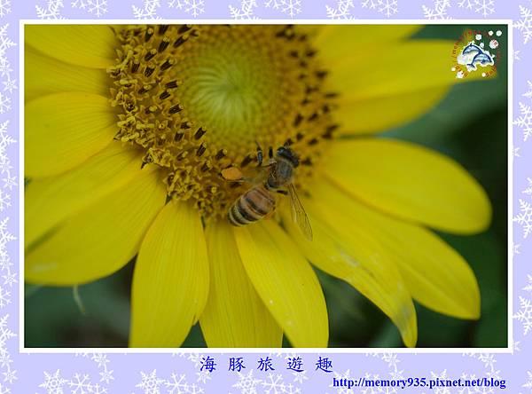 夏。向日葵 (1).jpg