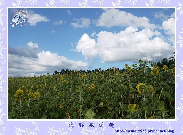 夏。向日葵 (7).jpg