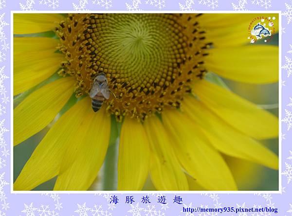 夏。向日葵 (11).jpg
