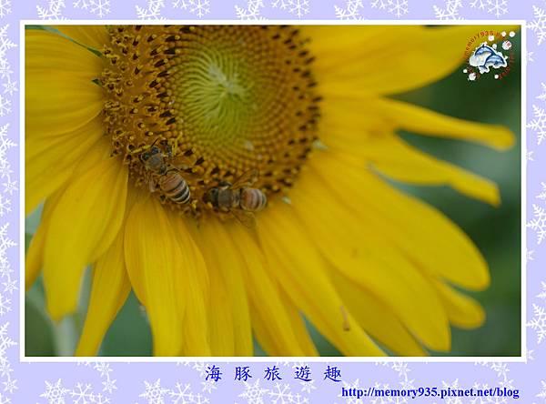 夏。向日葵 (12).jpg
