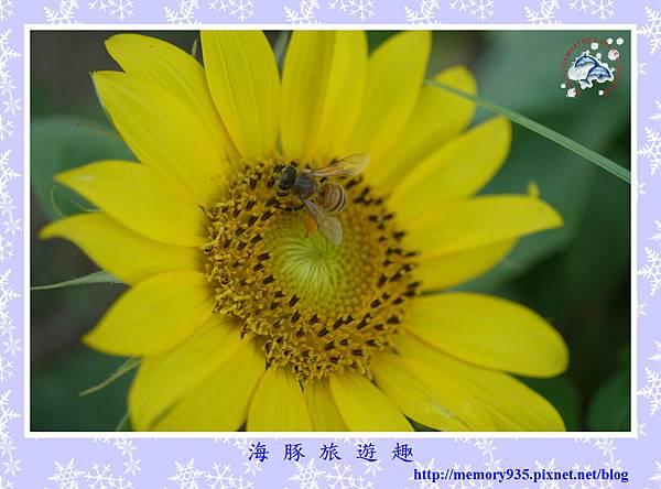 夏。向日葵 (14).jpg