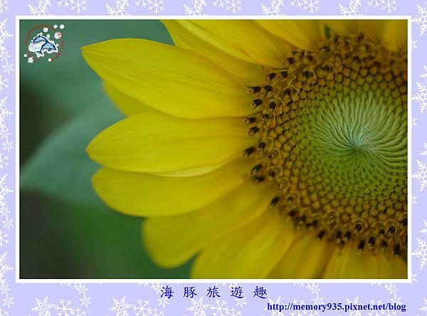 夏。向日葵 (18).jpg