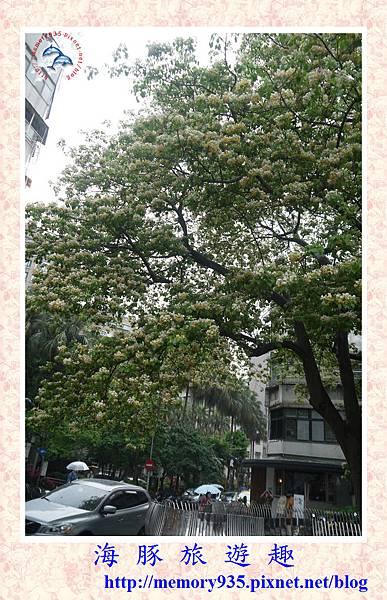 台北。加羅林魚木 (4).jpg