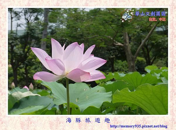台北。華山文創園區 (16).jpg