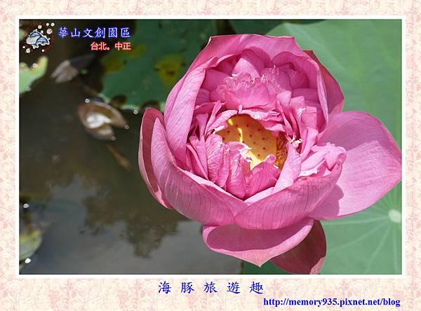 台北。華山文創園區 (19).jpg