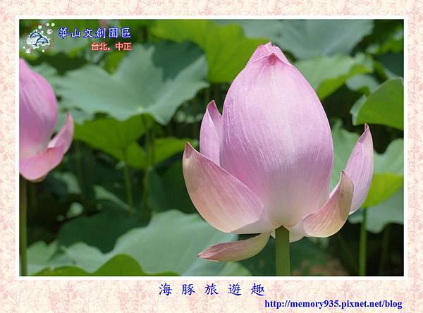 台北。華山文創園區 (17).jpg