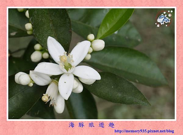 台東。香丁季 (1).jpg