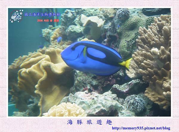 屏東。海洋生物博物館 (5).jpg
