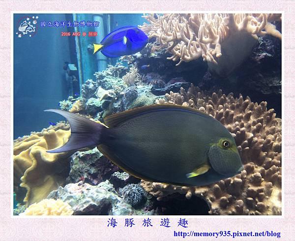 屏東。海洋生物博物館 (6).jpg