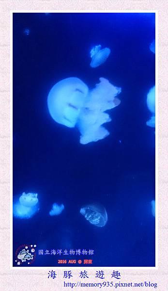 屏東。海洋生物博物館 (11).jpg