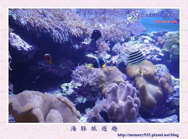 屏東。海洋生物博物館 (13).jpg
