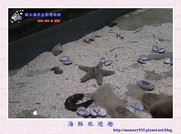 屏東。海洋生物博物館 (12).jpg
