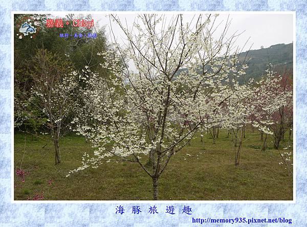 阿里山。台18龍美-石桌段 (1).jpg