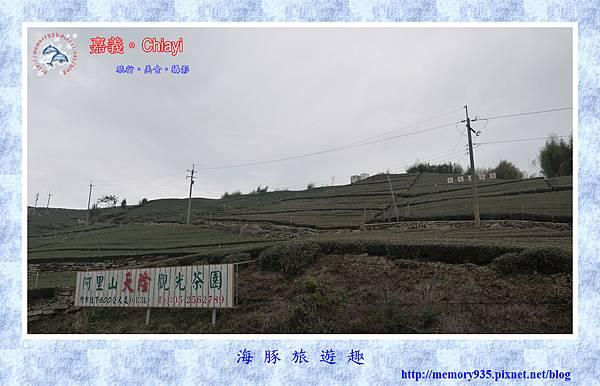 阿里山。台18龍美-石桌段 (5).jpg