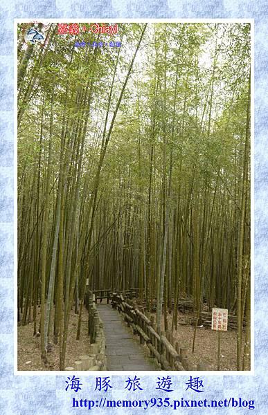 阿里山。台18龍美-石桌段 (6).jpg