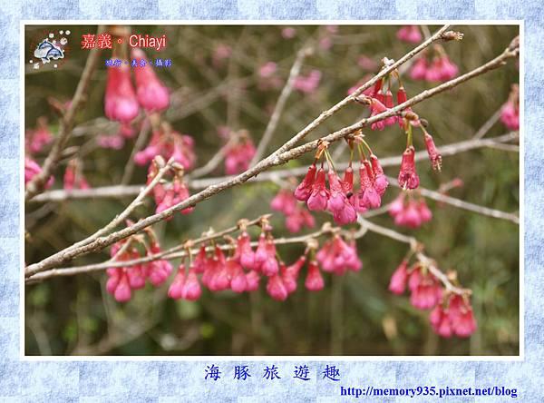 阿里山。台18龍美-石桌段 (8).jpg