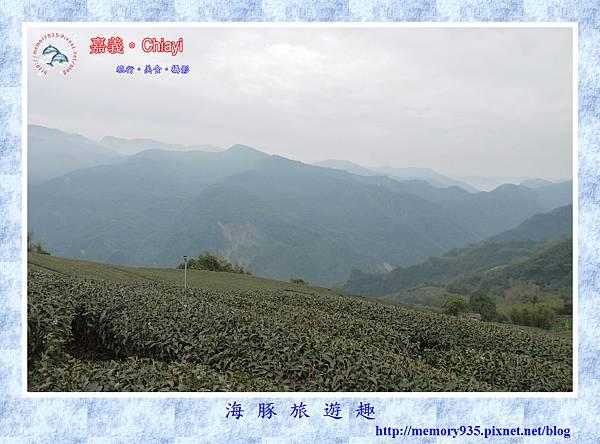 阿里山。台18龍美-石桌段 (4).jpg