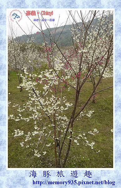 阿里山。台18龍美-石桌段 (9).jpg