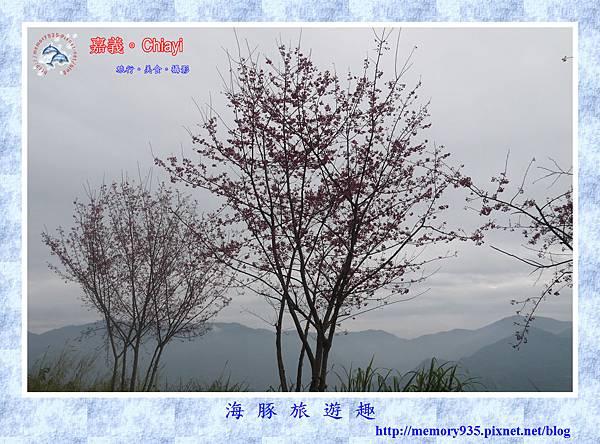 阿里山。台18龍美-石桌段 (12).jpg