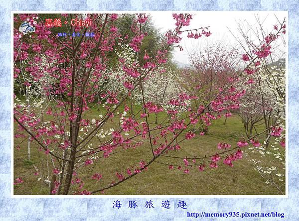 阿里山。台18龍美-石桌段 (10).jpg