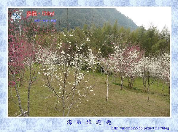 阿里山。台18龍美-石桌段 (11).jpg