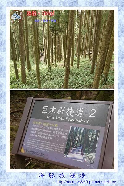 阿里山。阿里山國家森林遊樂區 (5).jpg
