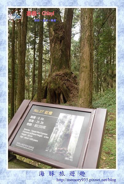 阿里山。阿里山國家森林遊樂區 (7).jpg