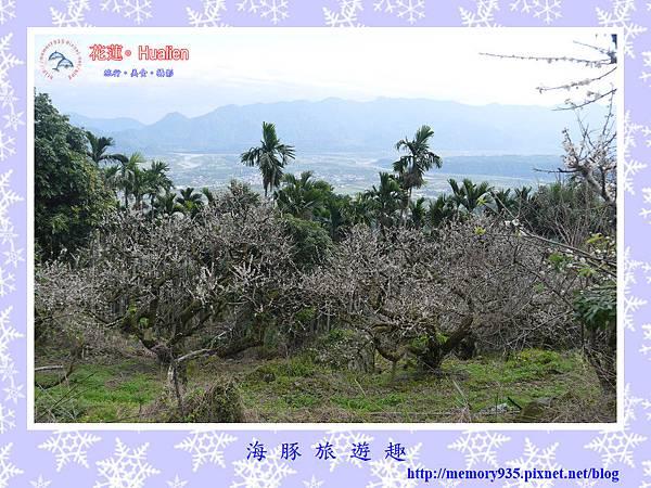 瑞穗。虎頭山梅花 (6).jpg