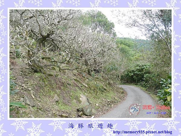 瑞穗。虎頭山梅花 (12).jpg