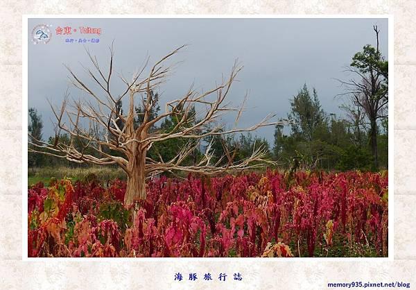 台東市。台東森林公園紅藜季 (1).jpg