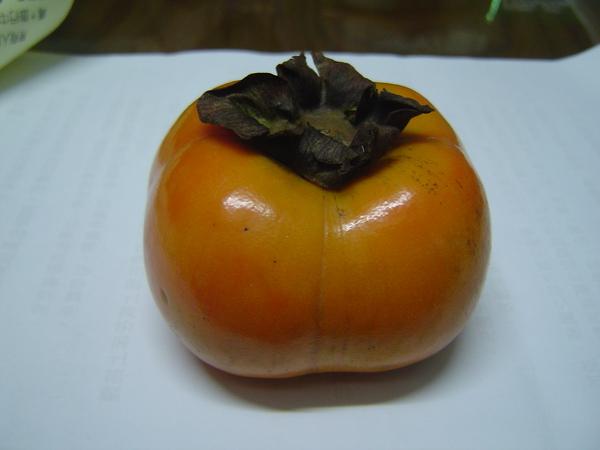 日本種紅柿