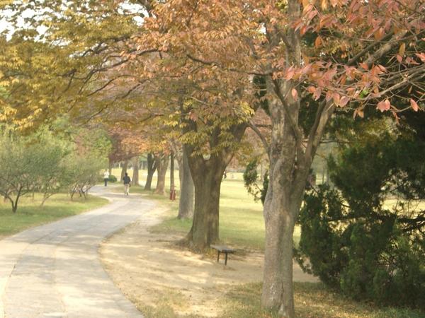 梅花谷公園.JPG