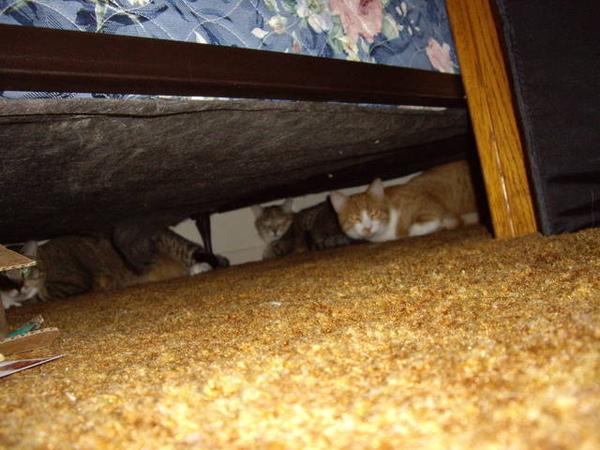 三隻貓 Hola飛台灣的那天