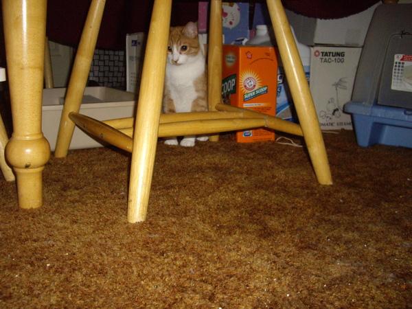 Boo在餐桌下