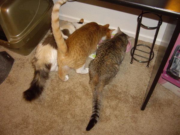 搬到新家後 三個一起吃飯的樣子^^