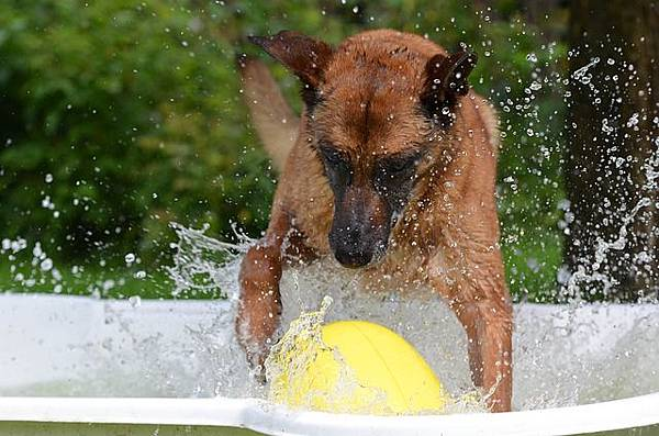 dog-pool-750564_640