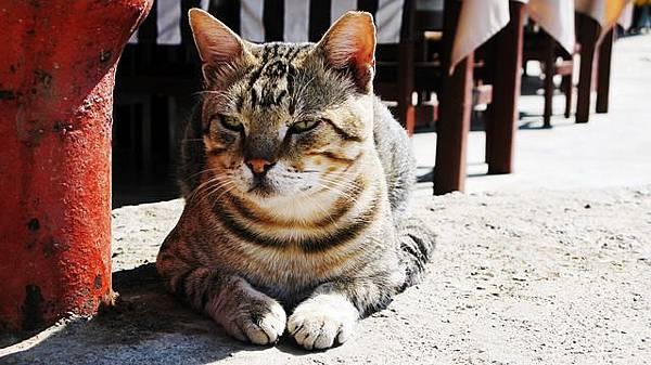 cat-348004_640