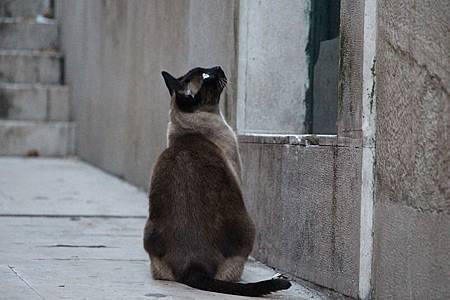 cat-679798_640