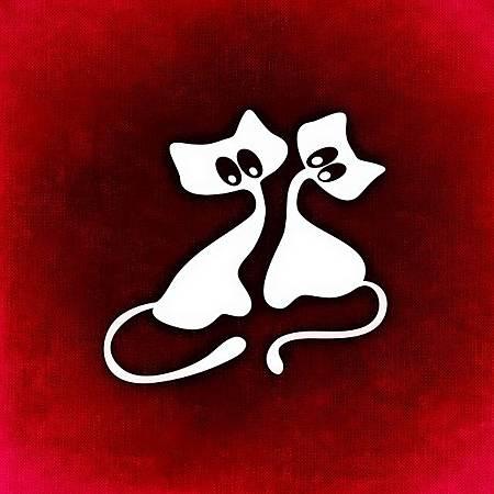 cat-861836_640