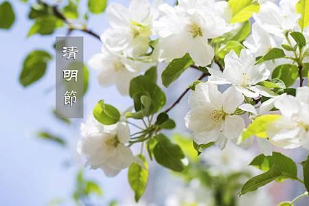 清明節-(2)