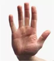 1丶手掌厚实