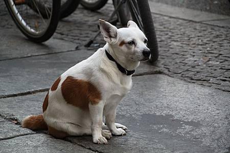 dog-246430_640