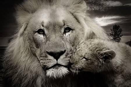 LEO 獅子座